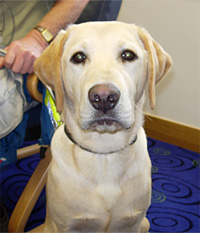 Morton the Guide Dog